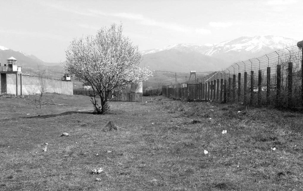 Qershia në burgun e Burrelit pranë të cilës është varrosur Giuseppe Terrusi